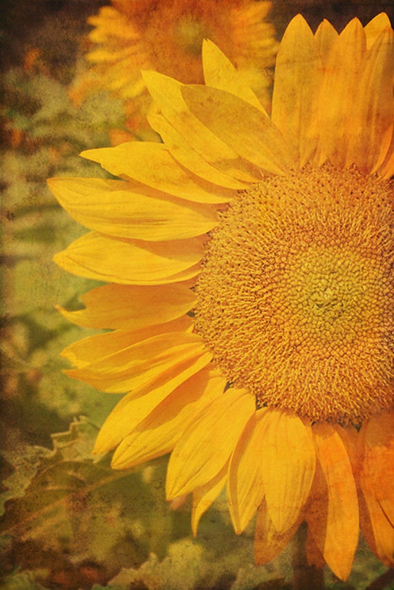 Sunflower - 8x12 Fine Art Photography - Yellow Flower - Vintage tapestry style - Made in Israel - Flower Photograph
