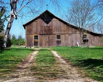 Barn Browns-8x10 Photo