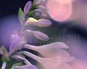 Flower Photography, PRETTY ME, Glistening Bokeh Glowing Delphinium, Digital Art  Print , Dreamy, Purple, Pink, Floral Decor, 16x20, 20x24