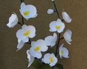 Phalaenopsis Orchid (moth orchid) - Paper orchid