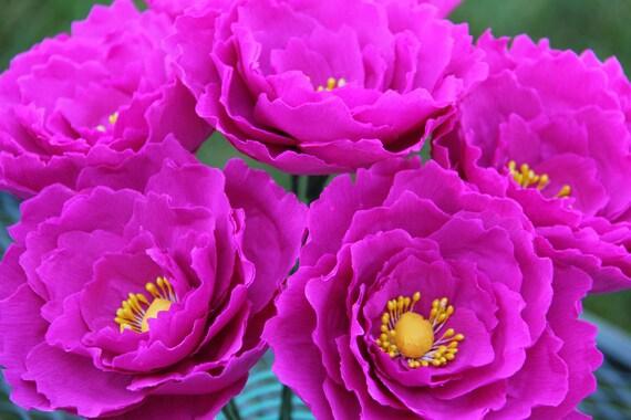 Peonies ( Fuchsia) - Crepe Paper Flowers - Paper Peonies