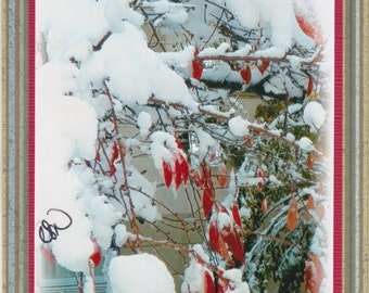 Holiday Snow Berries