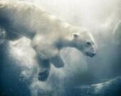Polar Bear Art,  Blue Photograph, Arctic Animal Art, Original Nature photography, Wildlife photography,  Underwater, Nature Wall Decor