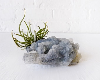 10% SALE - Air Plant Crystal Garden -  Chalcedony India Mineral with Air Plant Fuzzy Clump - Spring Gift