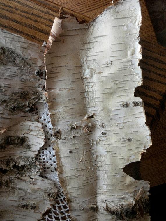 Untrimmed Natural Birch Bark for Crafts