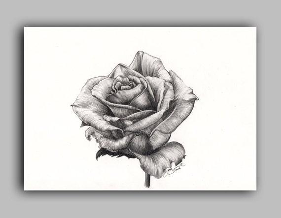 "Marilyn Monroe tea Rose, Print 5"" x 7"" - Paint the Moment"