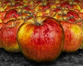 Bright Red Cooking Gala Apples No. 0124.8 - A Fine Art Still Life Kitchen Wall Decor Photograph