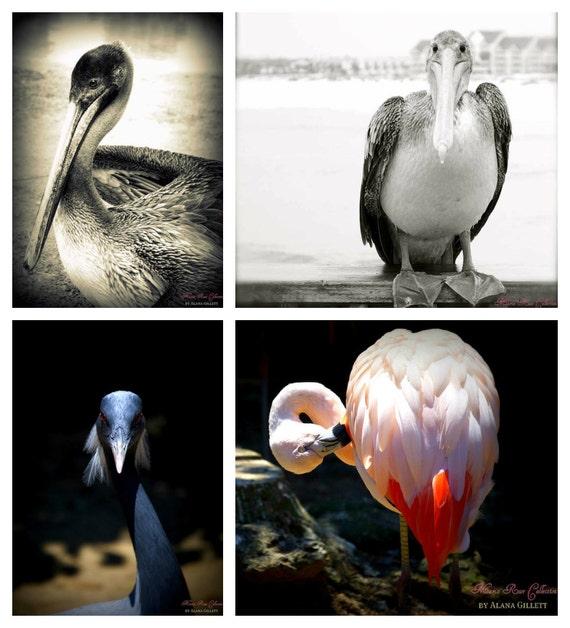 Bird of a Feather Photo Collection- Fine Art Photography- 4 photo prints- Alana Gillett- Pelican Flamingo BW Indigo Wall Art Home Decor