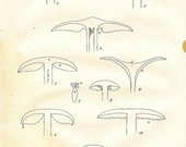 ANTIQUE MUSHROOM 1891 Art Print Book Plate 4 Frameable Beautiful Sections of Mushrooms Chart Black and White on Ivory Interior Design