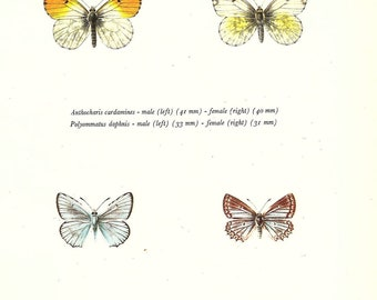 BUTTERFLY PRINT Art Original 1965 Book Plate 132 Beautiful Orange Tip and Meleager Blue Butterflies Flower Garden Nature Decoration