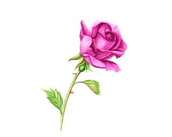 Lavender-Mauve Single Stem Rose- Watercolor Painting