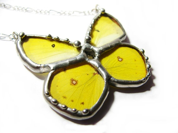 Real Yellow Sulphur Butterfly Wing Jewelry