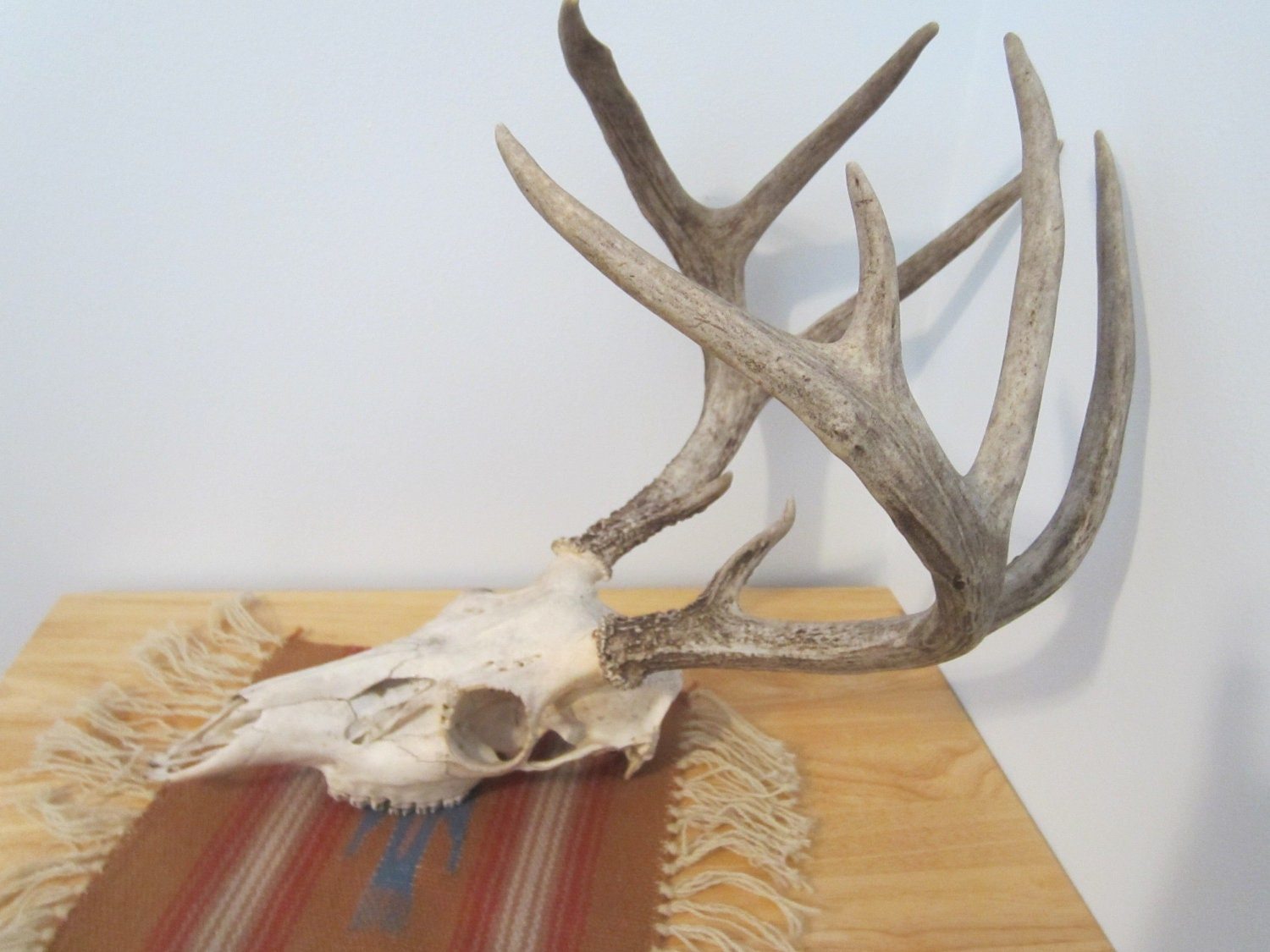 Deer Mount Wall Decor : Vintage deer skull antlers southwestern home decor by