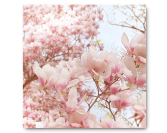 Pale Pink Magnolia Photo, Pastel Flower Photo, fine art print, pink flowers, honeysuckle, blue, baby pink,  tree, blossoms, floral