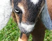Life Size Needle Felted Nubian Goat Kid