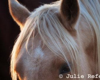 Horse Photograph Horse Art