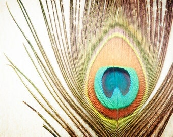 "Feather Photography, peacock photo nature still life print brown orange teal aqua beige wall art 8x10 Photograph, ""My Fine Feathered Friend"""
