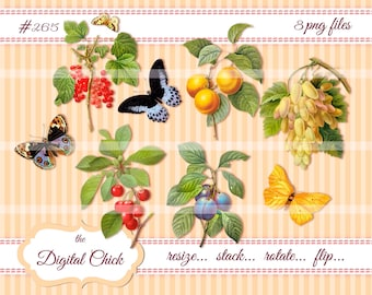 Digital Clipart, instant dowload, Vintage Fruit and Butterfly Clipart, butterflies, grapes, berries--Clip Art--Images--PNG files   265