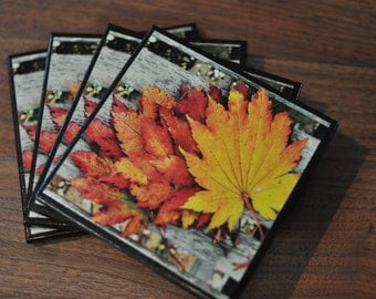 Autumn Leaves on a Bench Coasters