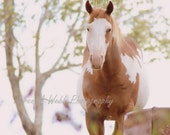 Photo Horse Photography Print Dreamy Tan White Fine Art Rural  Missouri Animal Country 8x10