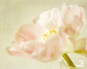 Pastel pink tulip, Nature photography, Pink tulip detail, Shabby chic home, Flower print, Floral Still life, French country home