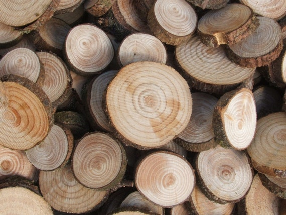 Wood Supplies 100 Wooden Spruce Slices. 1 to 1 5/8 inch. Supplies for all your Crafts and Projects.