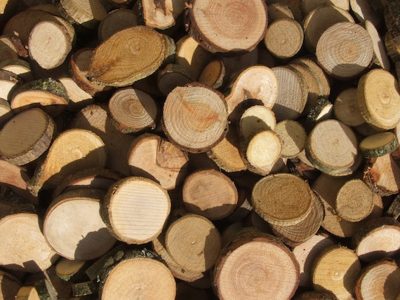Wood Slices 100 Mixed Wooden Tree Branch Rounds or Discs. 3/4 Inch to 1 3/4 inch Button and Bead blanks. Supplies.