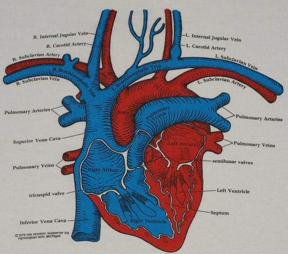 Vintage Heart Organ T-Shirt Tee Shirt Retro T-Shirt Medical Soft Thin Screen Stars