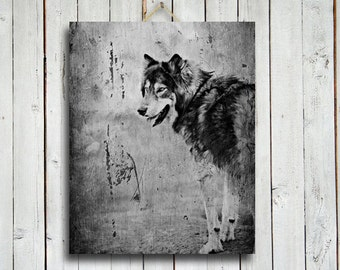 "Wolf Smile - Wolf - Canvas - Wolf photography - 16x20"" - Wolf Art - Native American Style -dog - Wolf dog - Wolf decor - Black Wolf"