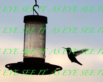 Silhouette of Hummingbird flying to Bird Feeder at Sunset  5x7 photo greeting card
