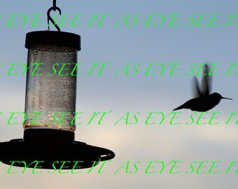 Silhouette of Hummingbird flying away from Bird Feeder at Sunset  5x7 photo greeting card