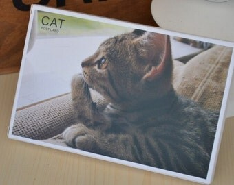 Postcard Set - My dear Cat - 30 Sheets