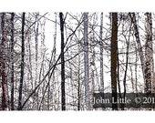 Winter scene greeting card- bare trees, white cold- 5x7