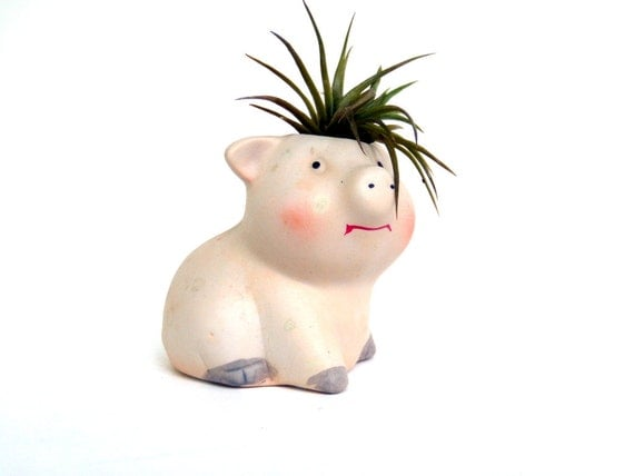 The Pig and the Air Plant