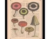 "Vintage 1790 Mushroom Illustration on Antique Book Page Art Print 8""x10"", Free Worldwide Shipping"