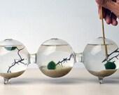 Marimo Terrarium - Japanese Moss Ball - Triple Aquarium - Home and Living - Desktop Accessory - Home Decor - Living Gift