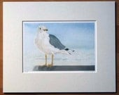 Ring-billed Gull Print - Beach Decor