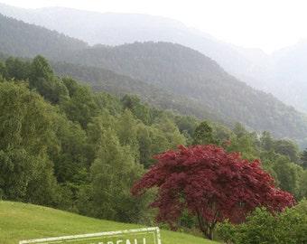International Travel Decor, Foggy Landscape, Tysnes Forest Decor, 8x12 10x15 12x18 16x24 Travel Photograph