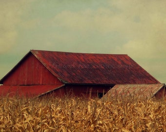 Rustic Red Barn Fine Art Photography Farm Country Farmhouse Autumn Fall Harvest Corn Field Yellow Gold Warm Vintage Home Decor Wall Art Gift