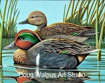 Acrylic Duck Print 11 x 14 Fine Art Green wing Teal Wildlife Art Birds Nature Animal