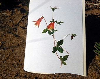 Columbine note card in watercolor Aquilegia canadensis on blank card