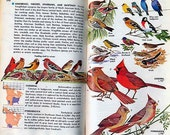 Birds of North America BOOK Illustrated Guide Natural Habitat Identification Illustrated Vintage Softcover