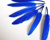 COBALT BLUE duck feathers / 3-4.5 in (7.5-11.5 cm) long, 12 pieces / F37-2