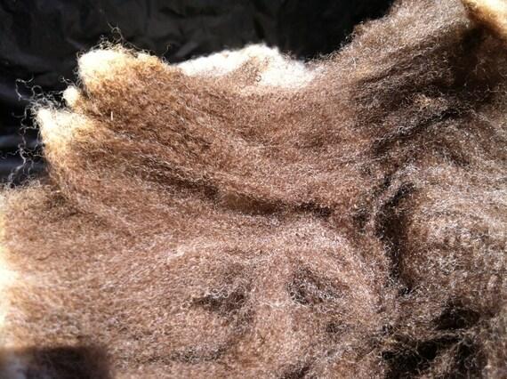 """Skirted CVM/Romeldale fleece- Ram """"Jacob"""" (002)"""