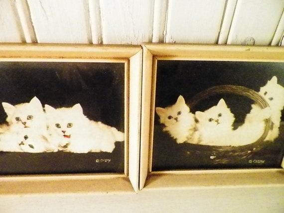 Bradley R Currey Cat Photographs