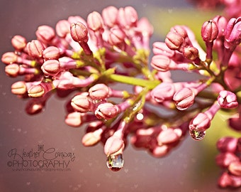 Spring Pink Photo Raindrops Summer Blossom Pastel Photo New Baby Nursury Wall Art Lilacs Heart Bokeh, available in several sizes Fine Art