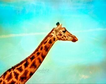 Safari Art- Photography print of Giraffe. Blue teal background. Kids room, nursery decor.