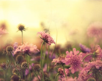Dream Land - Photography print of flowers.  Shabby chic decor. Enchanted and romantic. Pink dreamy decor, wall art, home decor