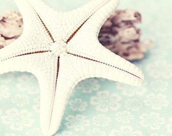 Beach Photography - Sea Life Photograph - Starfish Photo - Beach Cottage Decor - Beach - Fine Art Photography Print - White Aqua Beach Decor