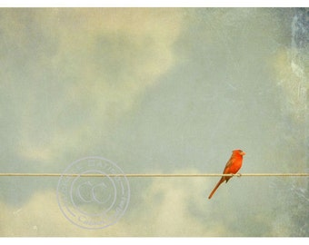 8x10 1/2 Cardinal on a Wire, Cardinal Silhouette in Moody Sky. Signed Photo Art.